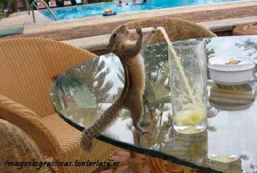 una ardilla bebiendo con pajita de un vaso