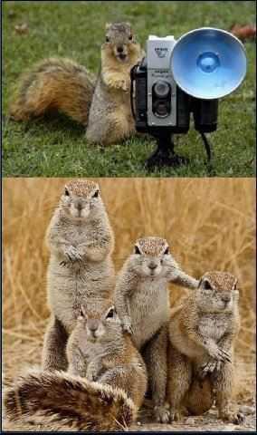 una ardilla sacando una foto a la familia