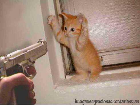 gato atracado
