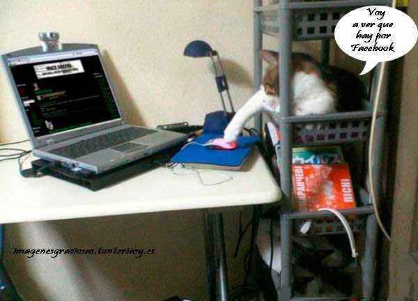gato manejando el raton del ordenador