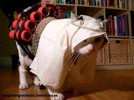 gato persa cargado de explosivos - Persian cat