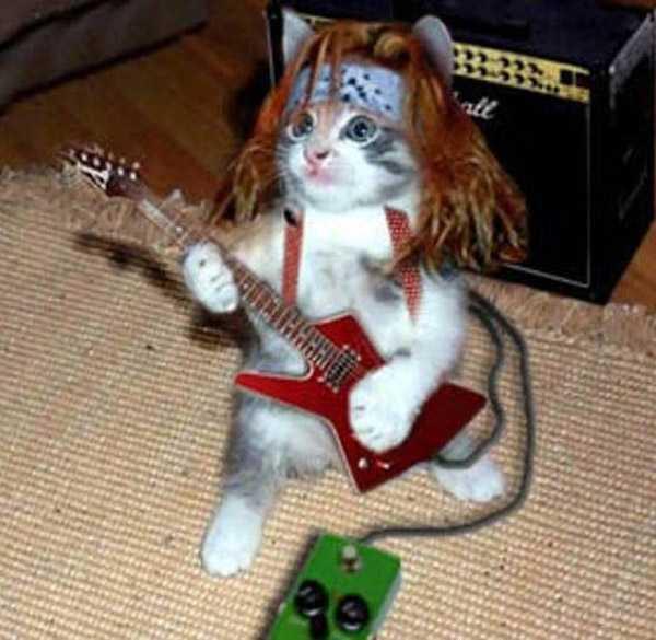 gato tocando guitarra electrica