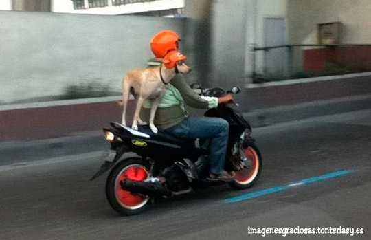 perro en moto pero con casco