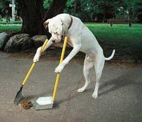 un perro barriendo y con recogedor