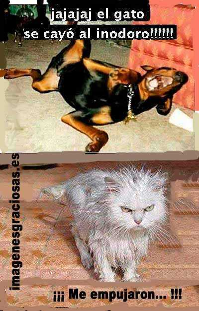 el perro se rie del gato