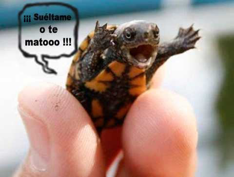 mini tortuga amenazante