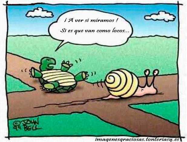 choque en un cruxe de un caracol con una tortuga