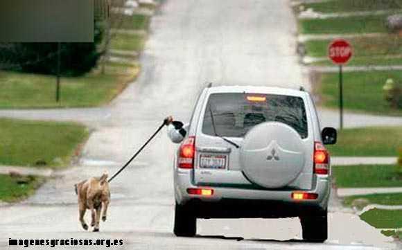 perro paseado con el duaño montado en el coche