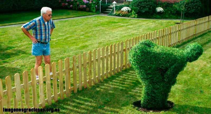 un arbusto en forma de hombre con el pompis mirando al jardin vecino