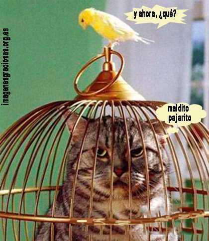 el pajaro tiene al gato en la jaula