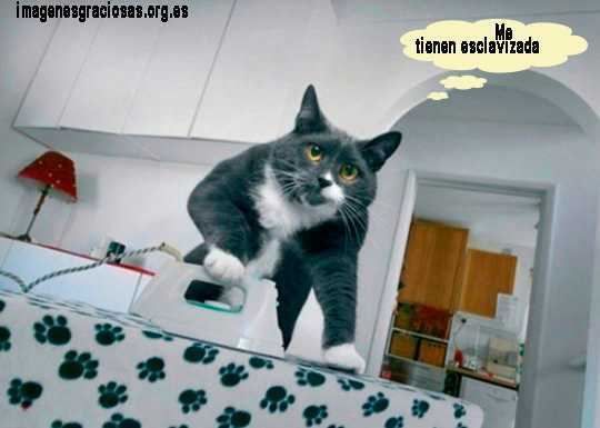 una gata planchando