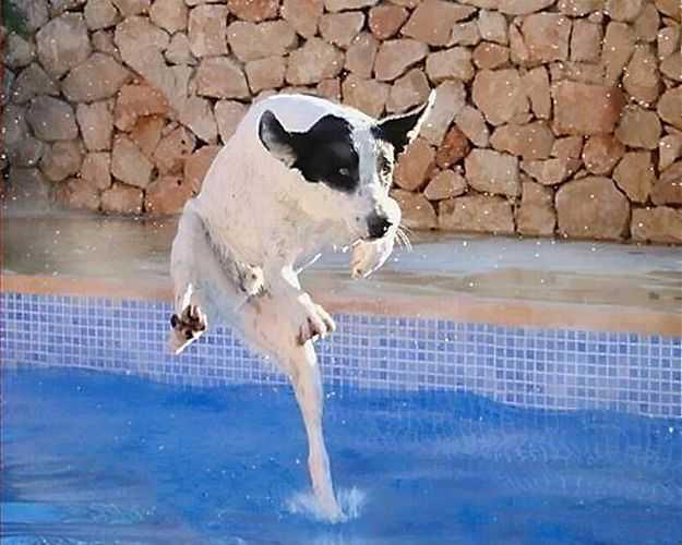 un perro emulando al mismo jesus andando sobre las aguas