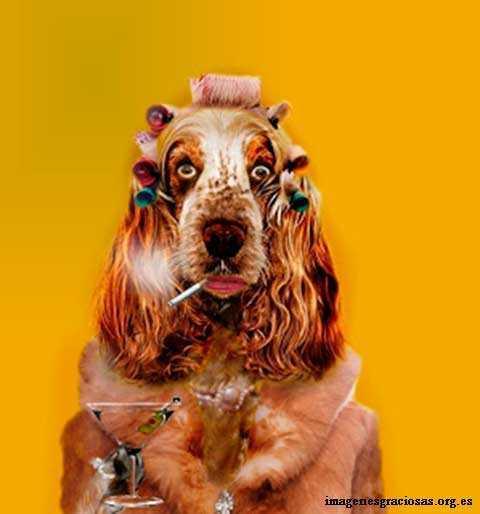 perro con rulos copa y cigarro