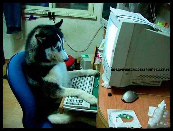 perro ante el ordenador