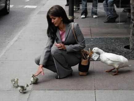patos ladrones en la calle