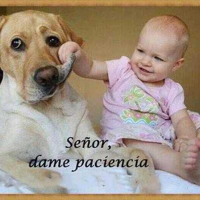 perro y niño en imagenes graciosas