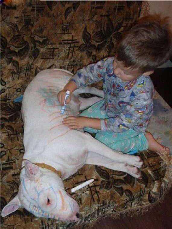 perro pintado por nene