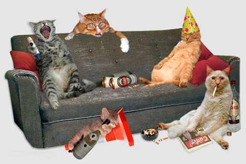 gatos de fiesta