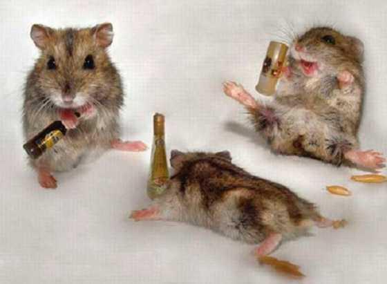 ratones de fiesta