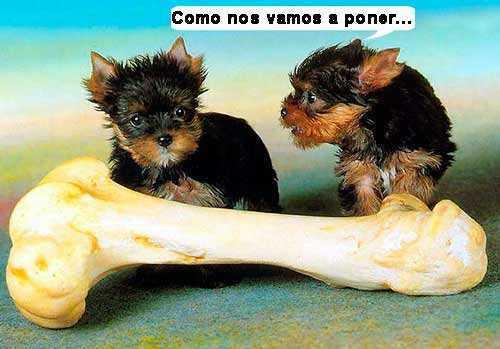 El hueso y los perros