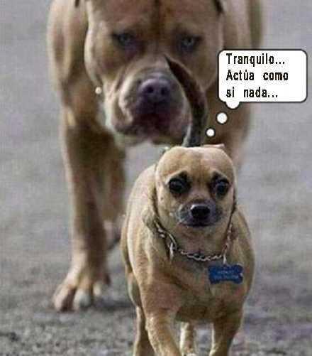 imageens graciosas con dos perros