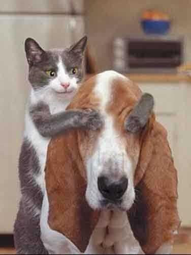 perro y gato juegan a quien soy