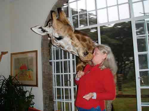 jirafa besando a una mujer