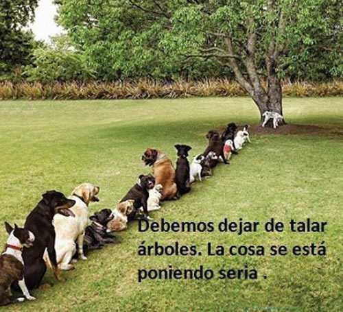 fotos graciosas con perros y arbol