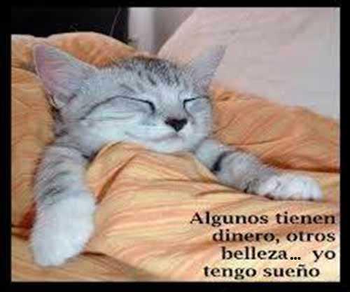 gracioso gatito dormido y tapado con una manta