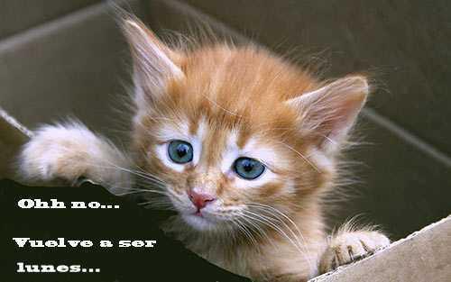 gatito en una graciosa imagen recordando que es lunes