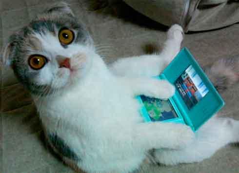 foto graciosa de un gato con una gameboy