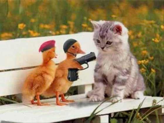 dos patitos con una pistola y un gatito
