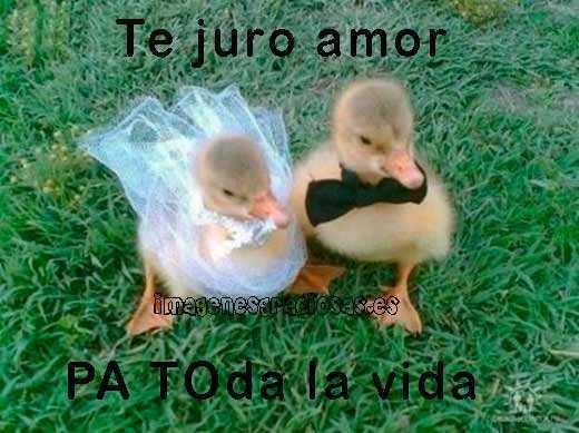 foto graciosa con dos patos en la boda
