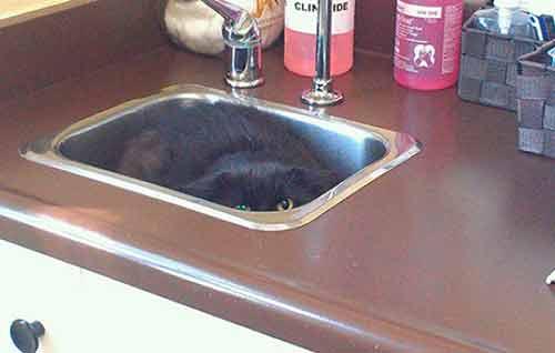 foto graciosa a gato escondido en el lavabo