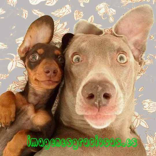 foto graciosa de dos perros