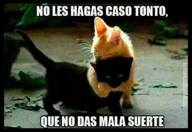gatito rubio y gatito negro amigos