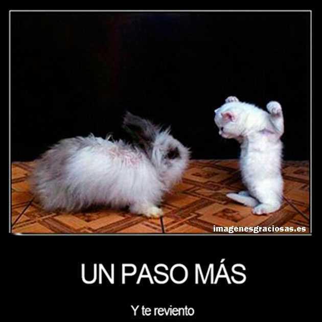 Gato y conejo