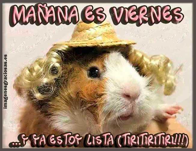 foto graciosa de una ratita de viernes