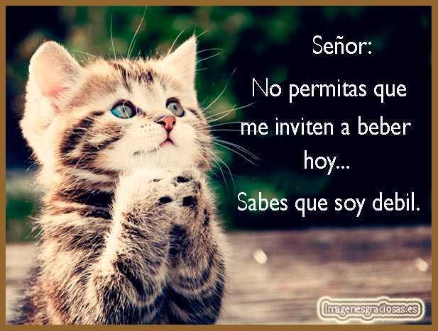gato rezando (muy gracioso)