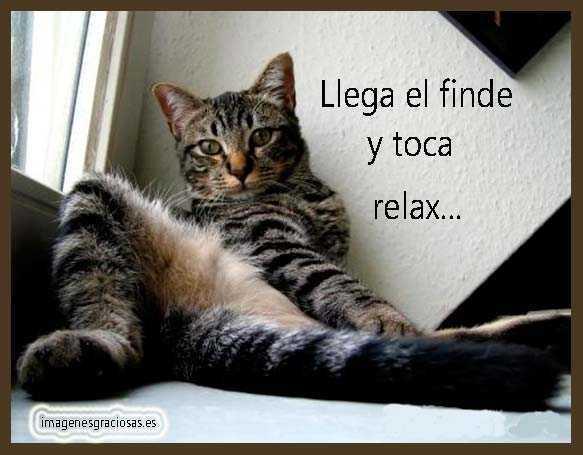 foto graciosa de un gato muy cómodo
