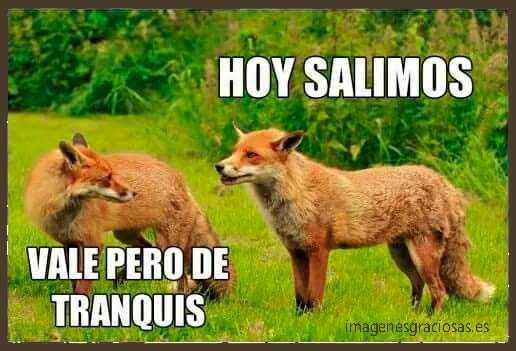 fotos graciosas de zorros (1)