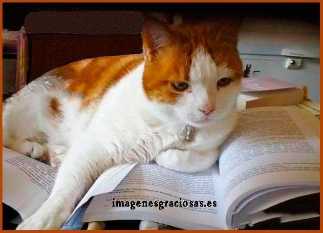 graciosa imagen de un gato que lee