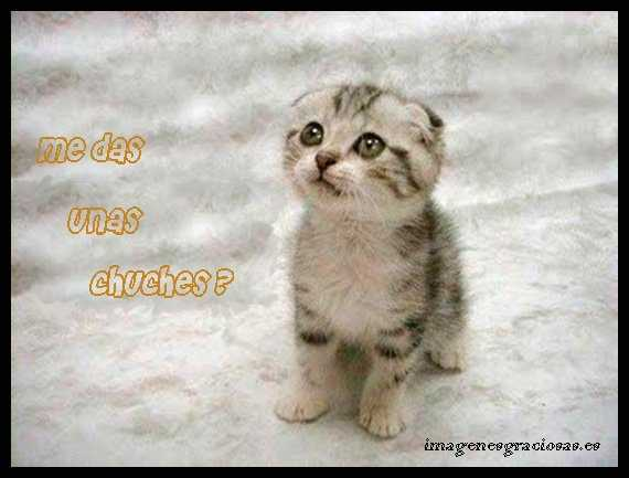 lindo gatito con aspecto de bueno