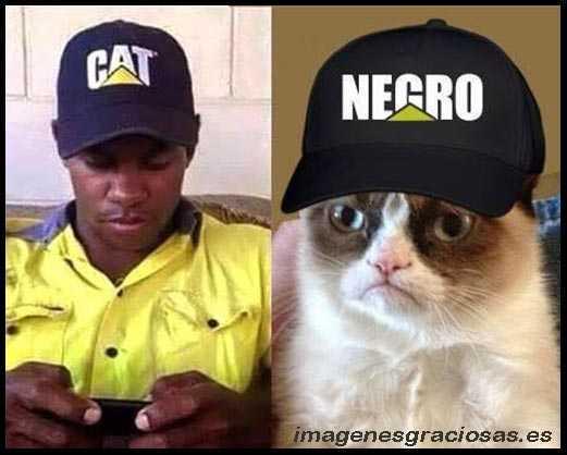 imagen graciosa de un gato con gorra