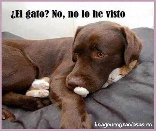 Imagen con humor de un perro y un gato