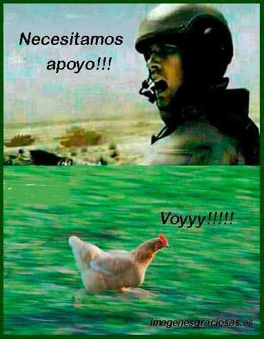 A pollo