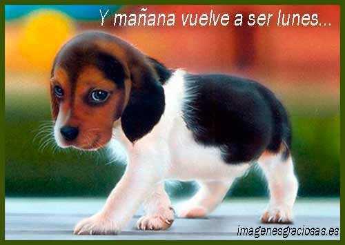 Foto graciosa de un perrito triste