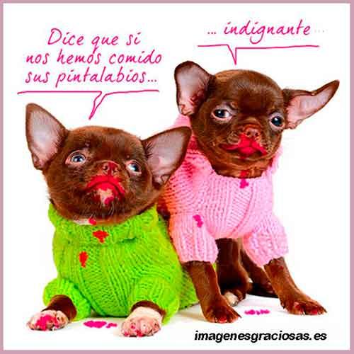 Imagen graciosa con dos perros manchados con maquillaje